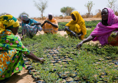 Darfuri Refugees working for CARE International tend to seedlings in a nursery where they grow trees in an effort to combat the firewood crisis.